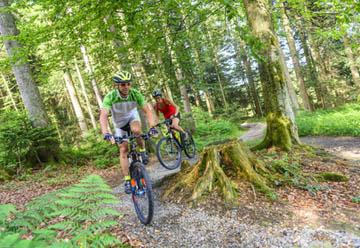 MTB-Trail Zella-Mehliser Runde