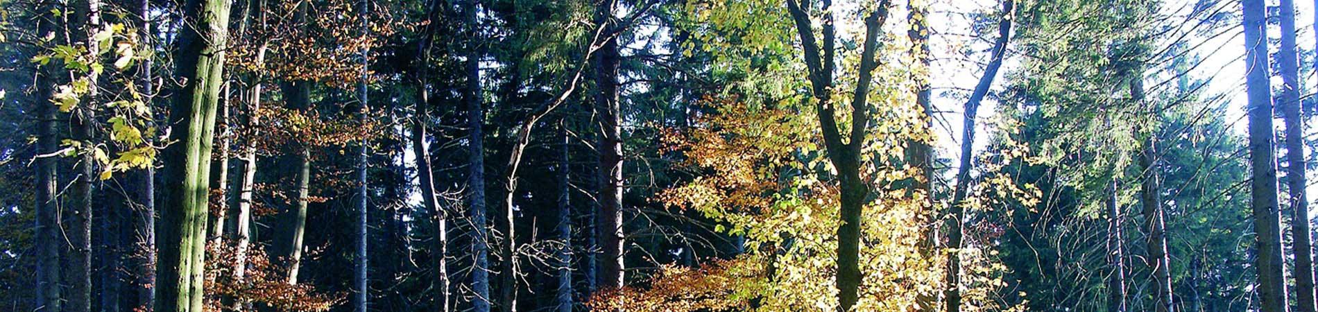 Herbst_wald.jpg